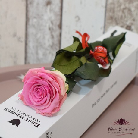Trandafir roz stabilizat