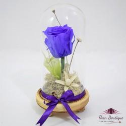 Trandafir mov criogenat