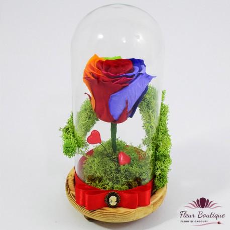 Trandafir criogenat multicolor in cupola